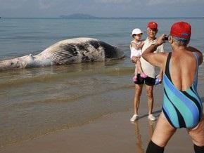 Ученые обнаружили девять новых видов организмов, питающихся трупами китов