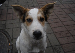 Эколог: Каждый год в Украине регистируют 30 тыс. нападений бездомных собак на людей