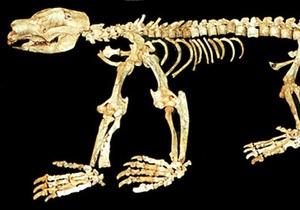 Ученые обнаружили неизвестное ранее сумчатое животное