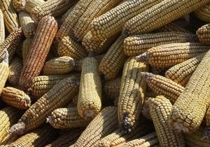 Украина пересеет вымерзшие озимые кукурузой - министерство
