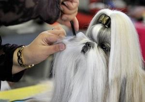 В Британии состоялся обряд освящения щенка