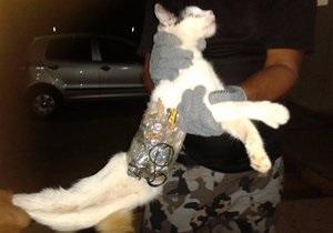 Охранники бразильской тюрьмы задержали кота со сверлами, напильниками и мобильным телефоном