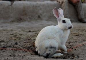 Немецкая учительница подала в суд на ученицу из-за рисунка зайца