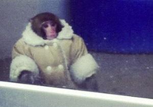 Новости Канады: В мае возобновится суд по делу найденной в IKEA обезьяны в пальто