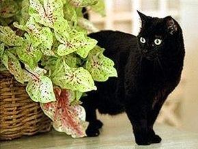 Буш скорбит в связи с кончиной любимой кошки
