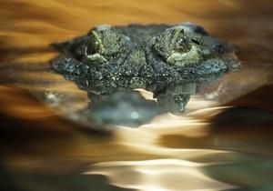 В окрестностях таиландского курорта c фермы сбежали десятки крокодилов