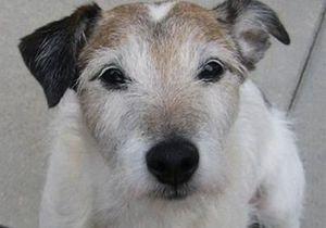 Новости США: В США из желудка собаки, принадлежащей экономисту с Уолл-стрит, извлекли 111 момент