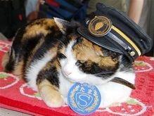 В Японии кошка увеличила доходы железной дороги