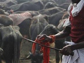 В Непале индуисты принесли в жертву 300 тысяч животных