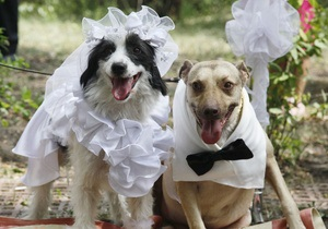 В интернете появился сайт знакомств для кошек и собак