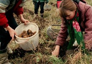 Украинские аграрии ощущают дефицит семенного картофеля