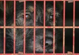 Власти Шри-Ланки отменили запрет на уничтожение бездомных собак