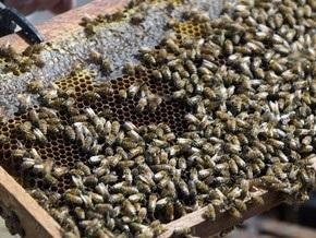 Украина становится одним из крупнейших экспортеров меда