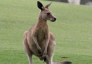 В Германии кенгуру сбежали из зоопарка через вырытые лисой и кабаном подкопы