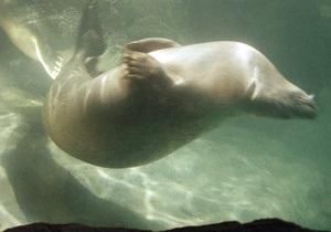 Письмо школьника из Донецка вызвало ажиотаж у канадских океанологов. Морские слоны проект Neptune