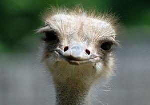 В киевском зоопарке умер страус