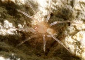 В США строительство за $15 млн остановили из-за паука
