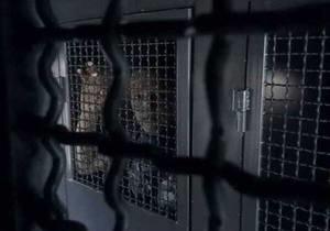 Межигорье - задержали активистов - Демальянс - Янукович - В милиции подтвердили факт задержания активистов возле Межигорья