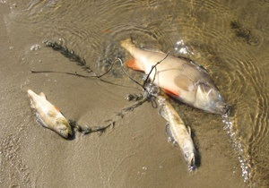 В Киевском море восстанавливают популяцию рыбы