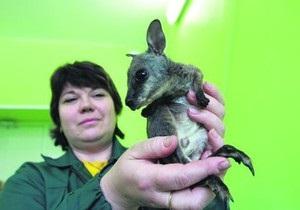 В киевском зоопарке кенгуренка назвали в честь чупакабры