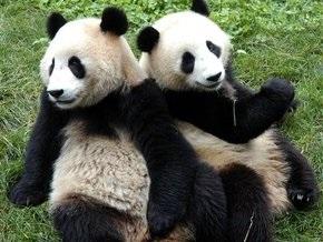 В Таиланде вооруженные грабители похитили двух игрушечных панд