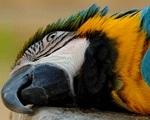 Пограничники усыпили 275 украинских контрабандных попугайчиков