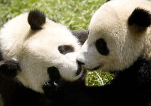 ООН объявила 2010-й годом биоразнообразия и сближения культур