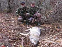 Украинские экологи: охота на волков - признак импотенции