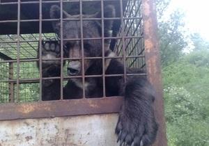 Зоозащитники обнаружили на полигоне в Николаевской области клетки с тремя медведями