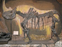 Доисторического носорога оценили в миллион