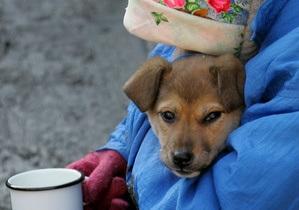 Азаров поручил министрам заняться бездомными животными