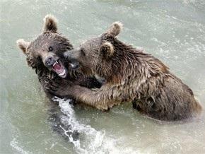 Медведев подарил столице Швейцарии двух медвежат