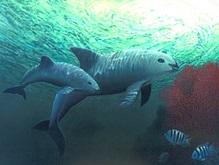Эксперты: 25% китообразных планеты находятся на грани выживания