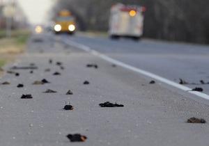Новые случаи массовой гибели птиц зафиксированы в Румынии и США