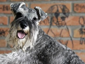 В Германии пес принес к дверям хозяйского дома носок с золотыми украшениями