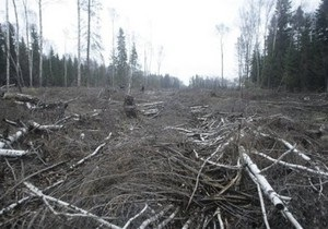Медведев возложил на Лужкова ответственность за строительство трассы через Химкинский лес