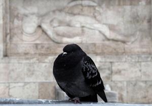 В Швеции санинспекторы нашли в башне церкви две тонны голубиного помета