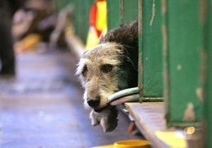 В киевских парках появятся временные вольеры для бездомных собак