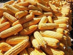 Японцы будут закупать кукурузу в Украине