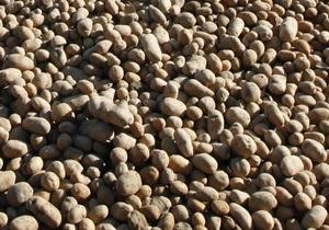 Минагропрод изучает возможность производства биотоплива из картофеля