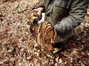 В Житомирской области семь человек отравились грибами