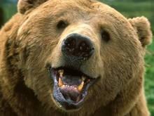 В румынском городке медведь убил мужчину