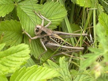 ООН: Голодающие страны могут питаться насекомыми
