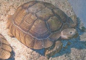 В США из зоомагазина украли 22-килограммовую черепаху