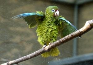 Американца приговорили к тюремному заключению за убийство попугая вилкой
