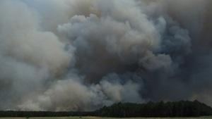 Площадь лесного пожара в Херсонской области достигла 700 га
