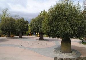 Странные новости: В Австралии на пересадку дерева потратят 100 тысяч долларов