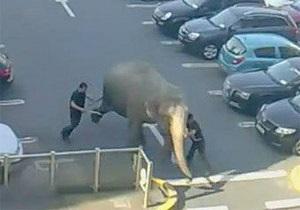 В Ирландии из цирка сбежала слониха