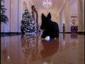 Пес Буша поздравил американцев с Рождеством