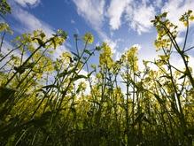 Метеорологи: Пыль украинских полей портит европейский воздух